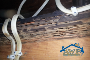 Indiana Home Inspections AWP Termite Image