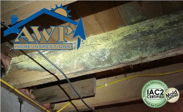 Discovering mold indoors raises major concerns