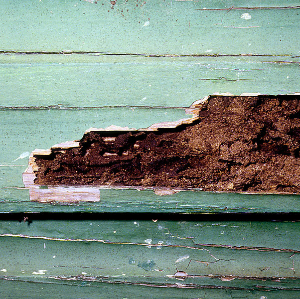 5 Tips To Prevent Termite Damage