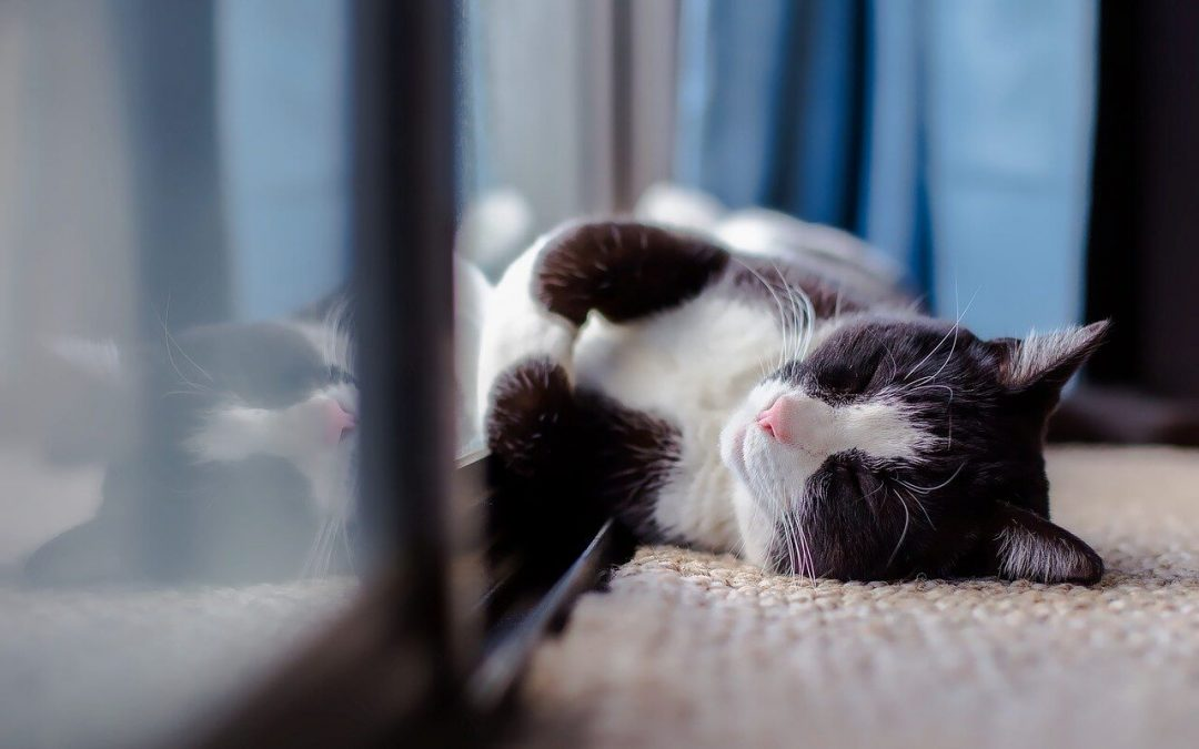 housecleaning tips for pet owners